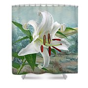 Casablanca Shower Curtain