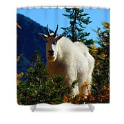 Cascade Range Mountain Goat Shower Curtain