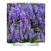 Cascading Wisteria 2 Shower Curtain
