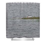 Caspian Terns Shower Curtain