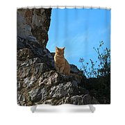 Castle Cat Shower Curtain