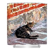 Cat Against Stone Shower Curtain