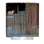 Cat And Barn Shower Curtain