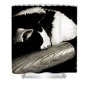 Cat And Bat Shower Curtain by Andee Design