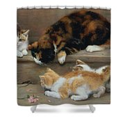 Cat And Kittens Chasing A Mouse   Shower Curtain by Rosa Jameson