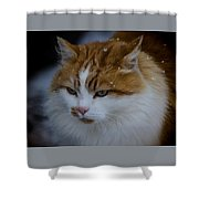 Cat And Snowflakes Shower Curtain