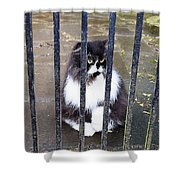 Cat At The Gate Shower Curtain