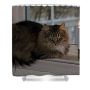 Cat By Candlelight Shower Curtain