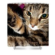 Cat Card Shower Curtain
