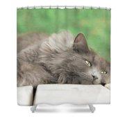 Cat Chillax Shower Curtain