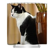 Cat Contimplation Shower Curtain