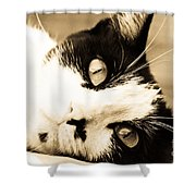 Cat Days Of Summer Shower Curtain