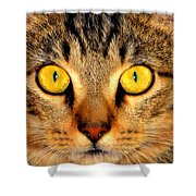 Cat Face Portraiture Shower Curtain
