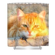 This Cat Has Been Waiting A Long Time For The Mouse  Shower Curtain