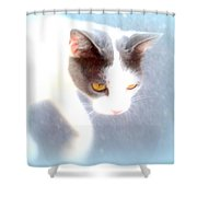 When You Are A Cat You Have A Different Perspective   Shower Curtain