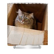 Cat In A Box Shower Curtain