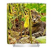 Cat In Field Shower Curtain