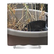 Cat In Flower Pot. Shower Curtain