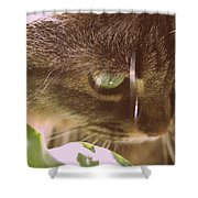 Cat In Sunlight Shower Curtain
