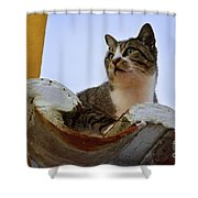 Cat In The Roof Shower Curtain