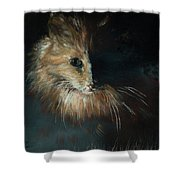 Cat In The Shade Shower Curtain