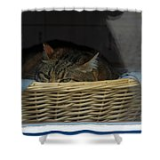 Cat In The Window Shower Curtain