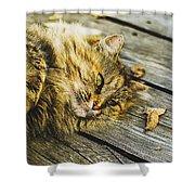 Cat Lie Wood Floor Shower Curtain