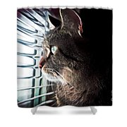 Cat Looking Out Window Shower Curtain