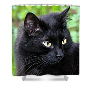 Cat Marquis Shower Curtain