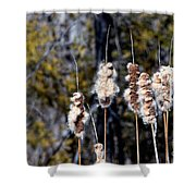 Cat O Eleven Tails Shower Curtain