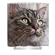 Cat Of Nicole 4 Shower Curtain