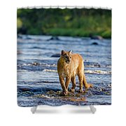 Cat On The River Shower Curtain