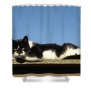 Cat On The Roof Shower Curtain