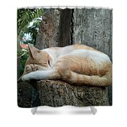 Cat On The Tree Shower Curtain