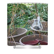 Cat Playing In Flowerpot Shower Curtain