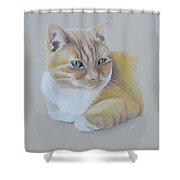 cat portrait - Astra Shower Curtain