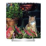 Cat Postcard Shower Curtain