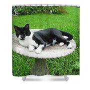 Cat Relaxing In A Birdbath In The Summertime  Shower Curtain
