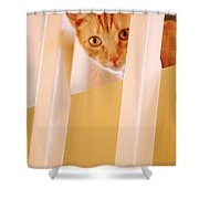 Cat Spy Shower Curtain