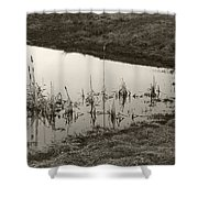 Cat Tail Reflections Shower Curtain
