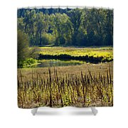 Cat Tails In The Sun Shower Curtain