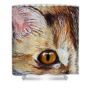 Cat Visions Shower Curtain