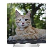 Cat Volterra Italy Shower Curtain