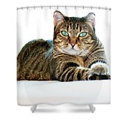 Cat With Bright Eyes Shower Curtain