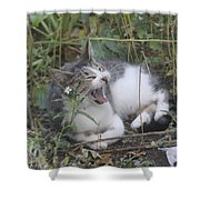 Cat Yawning In The Garden Shower Curtain
