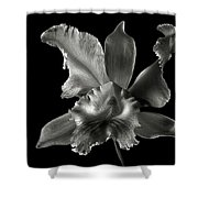 Catalea Orchid In Black And White Shower Curtain
