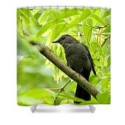 Catbird Shower Curtain