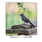 Catbird Calling Shower Curtain