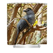 Catbird In Spring Shower Curtain