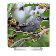 Catbird Scores A Mulberry Shower Curtain